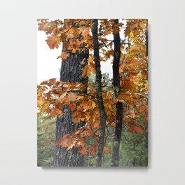 Red Oak Metal Print