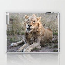 Male African Lion Laptop & iPad Skin