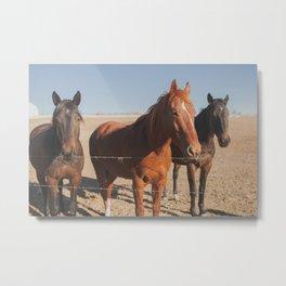 HORSES! Metal Print