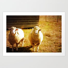 Sheepish Art Print