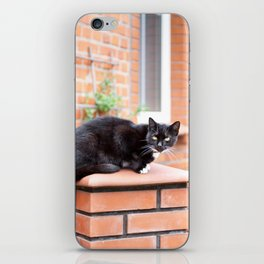 lonely stray black cat sitting iPhone Skin