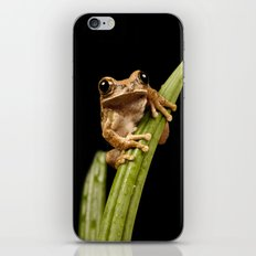 Marbled Tree Frog iPhone Skin