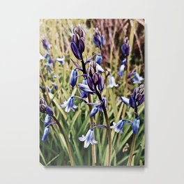 Bluebells, Magical Flowers Of Spells Metal Print