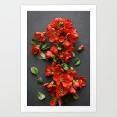 Red Quince Blossom Art Print