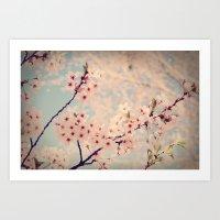 cherry Blossoms 2 Art Print