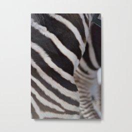 Zebra 02 Metal Print