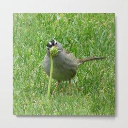 Bird at Wapato Park Metal Print