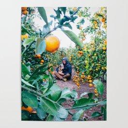Valencian Orange Grove Poster