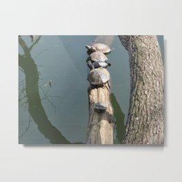 Turtles on a log Metal Print