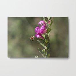 Bee Flying Towards Ultra Violet Texas Ranger Flower Metal Print