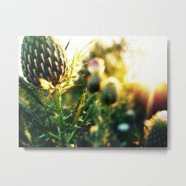 Thistle n Sun Metal Print