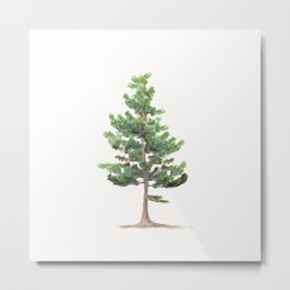 Young Sierra Lodgepole Pine Metal Print