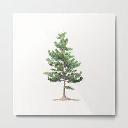 Young Sierra Lodgepole Pine Metal Print