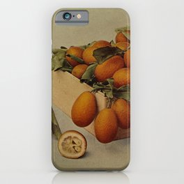 Vintage Print - Birds and Nature (1901) - Kumquat iPhone Case
