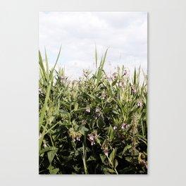 Field of Comfrey Canvas Print