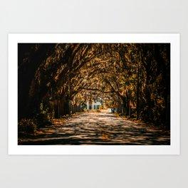 Magnolia Avenue in Fall Art Print