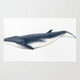Bryde´s baby whale (Balaenoptera brydei) Rug