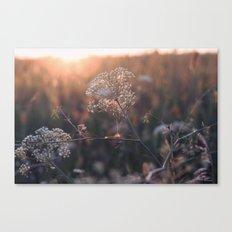 last summer dream  Canvas Print