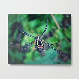 Not your average spider (01) Metal Print