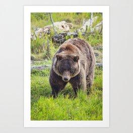 Grizzly Bear 0295v04 Art Print