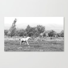 old photography Canvas Print