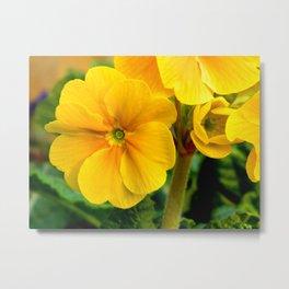 Yellow Heartsease Flower Metal Print