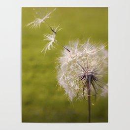 Wishing on a Dandelion Poster