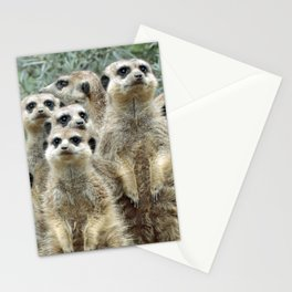 Meerkat20170501_by_JAMFoto Stationery Cards
