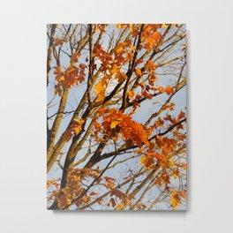 Autumn Orange Metal Print