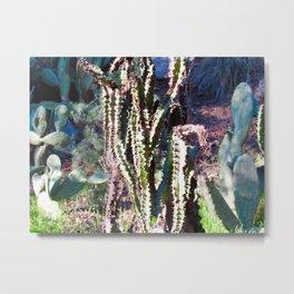Wisdom Cactus Metal Print