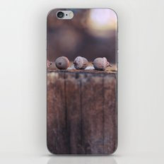 5 Acorns iPhone & iPod Skin