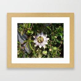 Passion Flower Framed Art Print