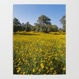 Cyprus Wildflower Meadow Poster