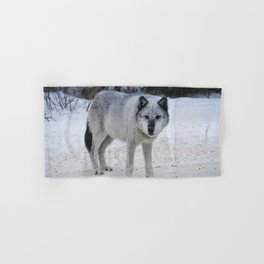 Lone wolf of the Canadian Rocky Mountains Hand & Bath Towel