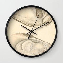 Oyster Anatomy Wall Clock