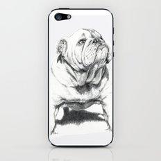 Dogs: Bull Dog iPhone & iPod Skin