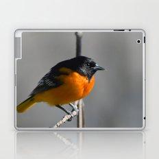 Male Baltimore Oriole Laptop & iPad Skin