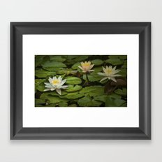 Lily Pads and Blossoms No 186 Framed Art Print