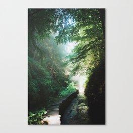 Into The Mist 1 Canvas Print