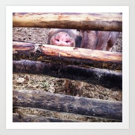 Pig Pig Art Print