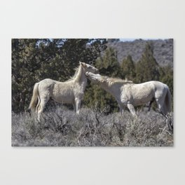 Wild Horses with Playful Spirits No 7 Canvas Print