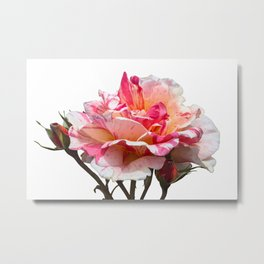 isolated roses for valentine's day and holidays Metal Print