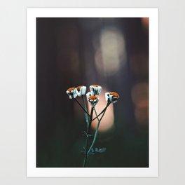Wildflower Art Print