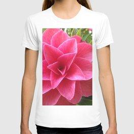 Rosé Tea Rose T-shirt