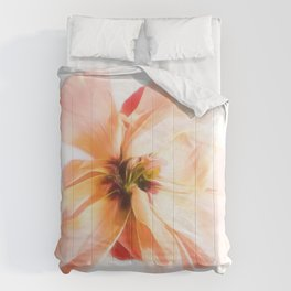 Curb Appeal Comforters