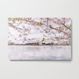 Washington DC Cherry Blossoms - Thomas Jefferson Memorial III Metal Print