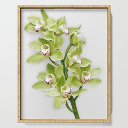 Green Cymbidium Orchid Flower Floral Stem Serving Tray