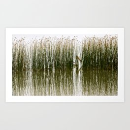 Pelican Hideout Art Print