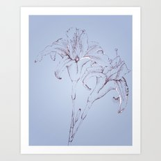 Lillys in Blue Art Print