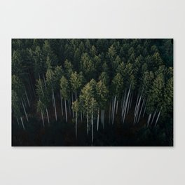 Aerial Photograph of a pine forest in Germany - Landscape Photography Canvas Print